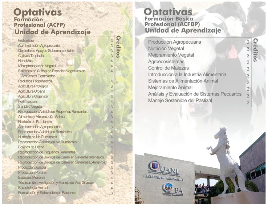PM AGRONEGOCIOS OPTATIVAS